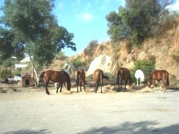 Horse Riding Business for sale in Spain